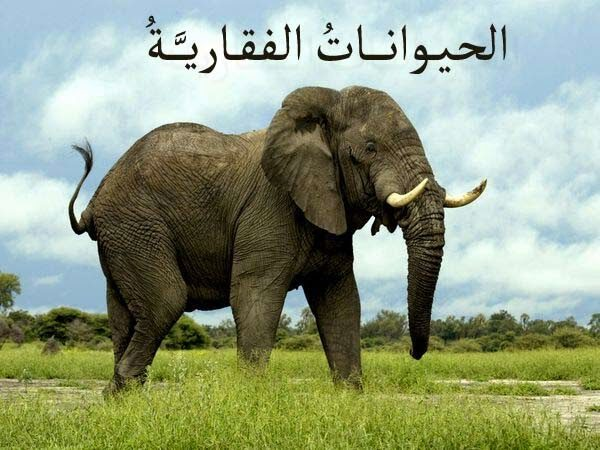 تحضير العلوم درس الحيوانات الفقارية الرابع الابتدائي الفصل الاول
