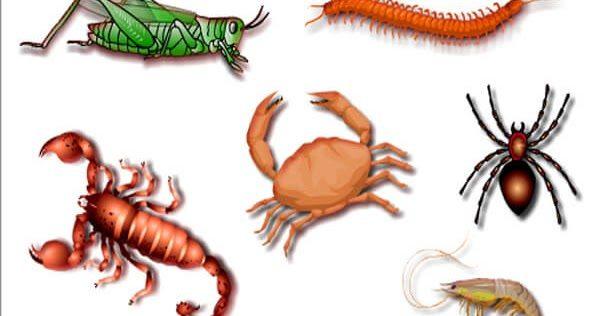تحضير العلوم درس الحيوانات اللافقارية الرابع الابتدائي الفصل الاول