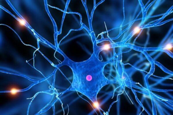 تحضير العلوم درس الخلايا الرابع الابتدائي الفصل الاول
