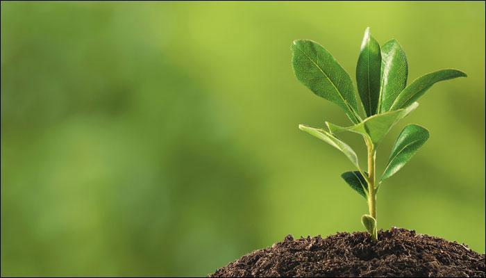 تحضير العلوم درس النباتات الخامس الابتدائي الفصل الاول