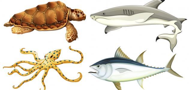 تحضير العلوم درس تصنيف المخلوقات الخامس الابتدائي الفصل الاول