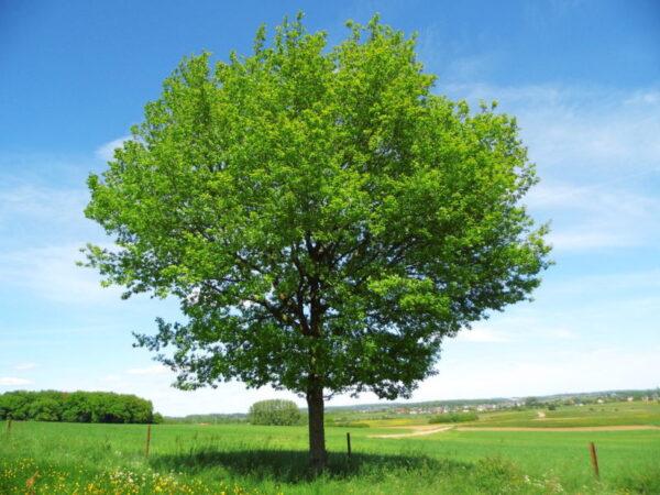 مطوية عن اسبوع الشجرة