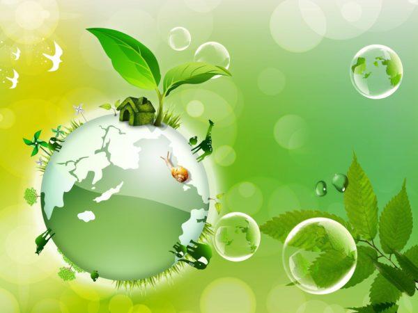 اسئلة علم البيئة مقررات والاجابة