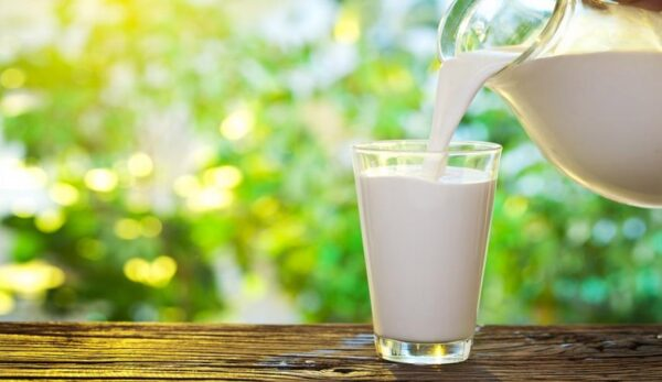 تحضير درس الحليب الرابع الابتدائي