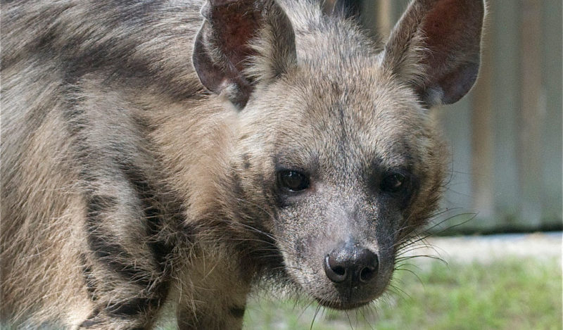 الحيوانات المهددة بالانقراض في بلادنا والجهود المبذولة للحفاظ عليها