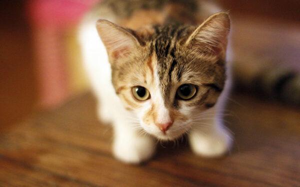 بوربوينت قصة اثار اصابع القطة