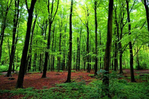 تحضير علوم درس عمليات الحياة في النباتات السادس الابتدائي الفصل الاول 1441 هـ - 2020 م