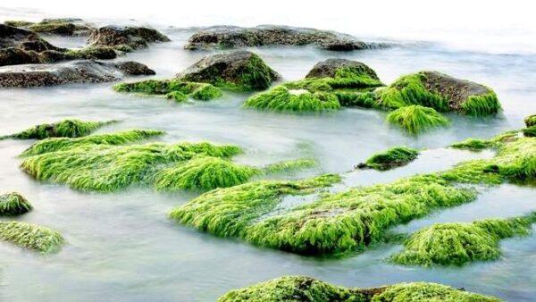 تحضير علوم درس مقارنة الأنظمة البيئية السادس الابتدائي الفصل الاول 1441 هـ - 2020 م