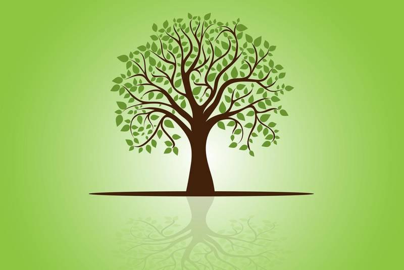 اختبار تثبيت المهارات درس الشجرة الحزينة الاول الابتدائي الفصل الثاني 1441 هـ - 2020 م