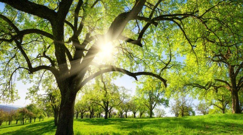 حل تدريبات درس الشجرة الحزينة الاول الابتدائي الفصل الثاني