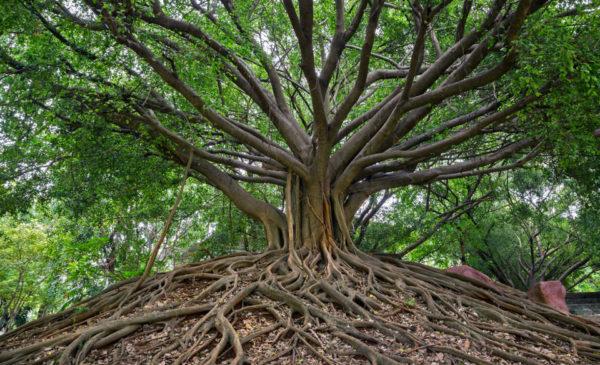 درس الشجرة الحزينة تعلم نشط الاول الابتدائي الفصل الثاني