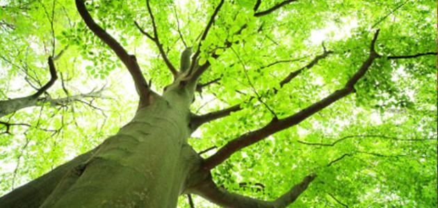 توزيع مقرر علم البيئة 4 نظام المقررات 1442 هـ - 2021 م