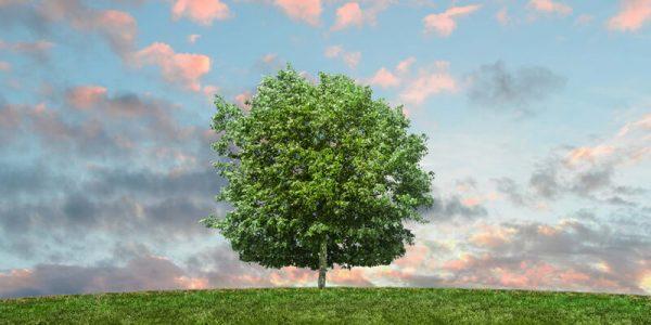 اسئلة مادة علم البيئة مقررات