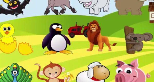 التخطيط للفهم وحدة الحيوان رياض اطفال