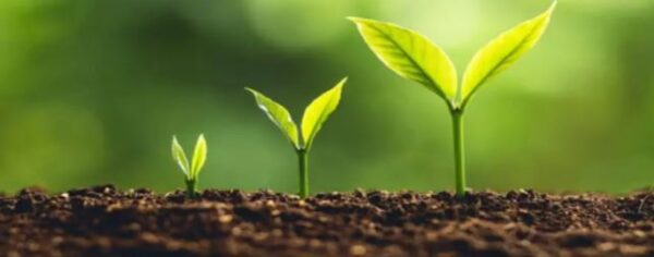 التخطيط للفهم وحده النبات رياض اطفال